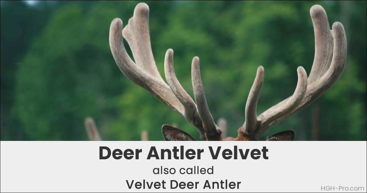 Deer antler velvet hgh